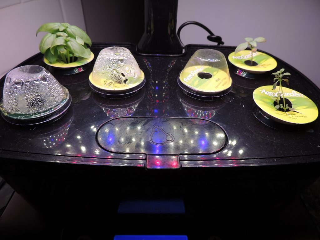 AeroGarden Growth Update Close-up